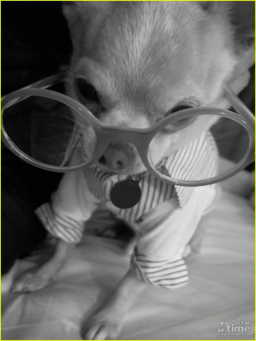 小狗带墨镜叼烟表情包分享展示