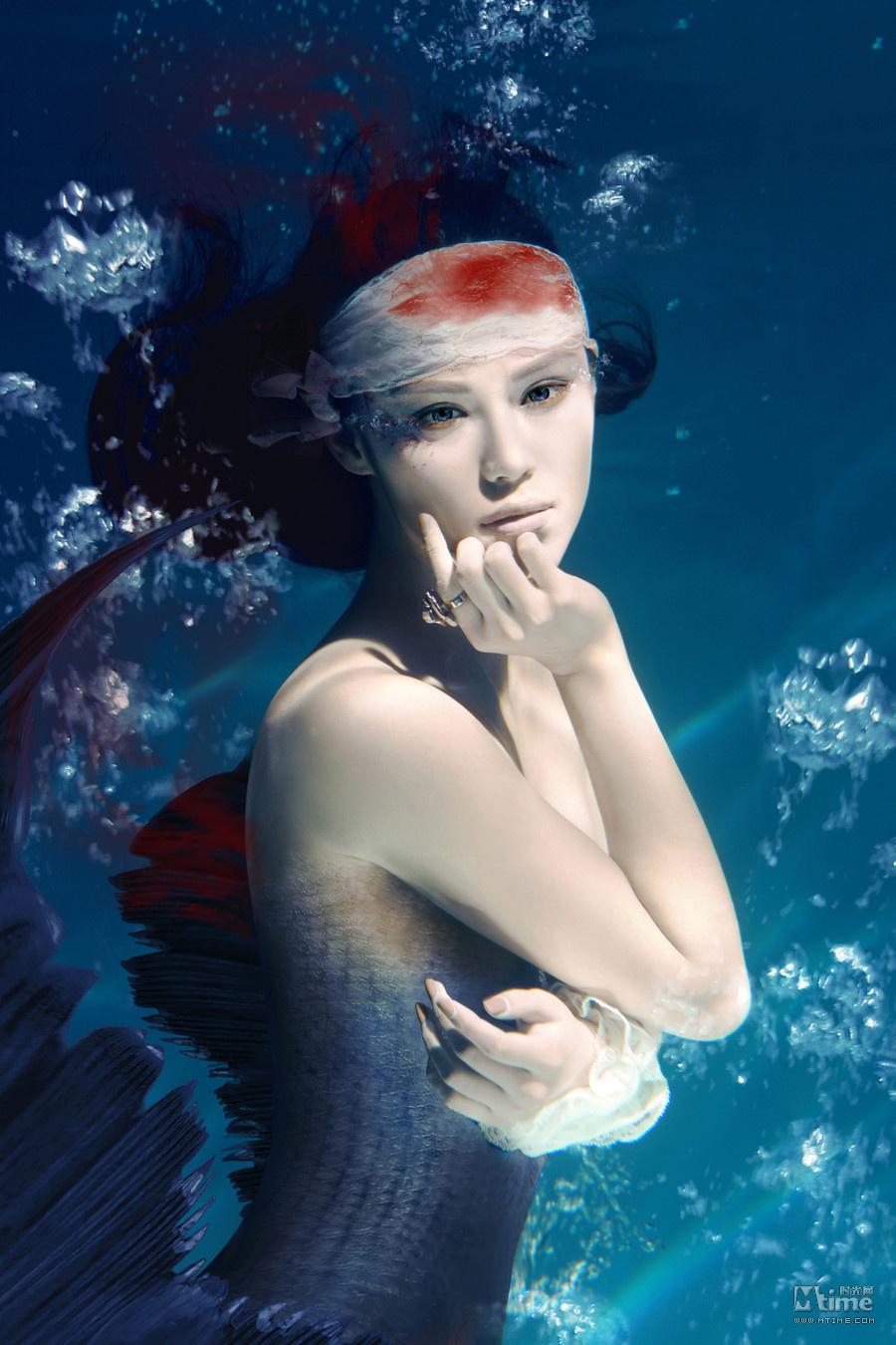 呼吁保护鲨鱼拒绝鱼翅