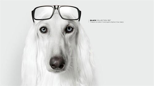 戴眼镜的狗狗