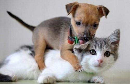 可爱死了~~喜欢猫咪和狗狗的进来看看吧!