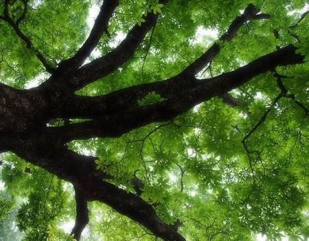 手绘俯视树