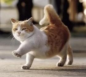 走路同手同脚的不但有人,还有猫