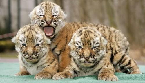 可爱的动物宝宝们~~~每个都是萌到爆的小可爱啊