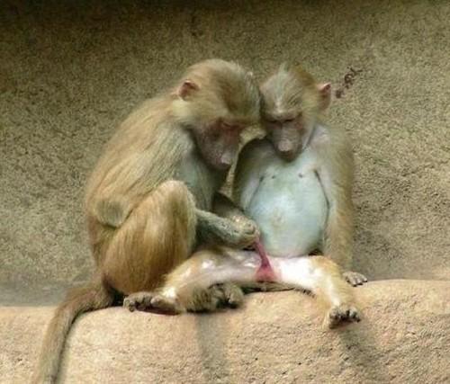 世界上生殖器最大的民族:——非洲象人族