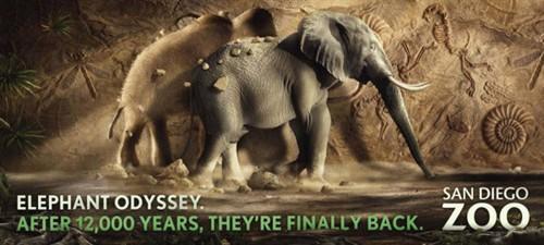 这三张是圣地亚哥动物园的广告图,下面的英文意思是:12000年