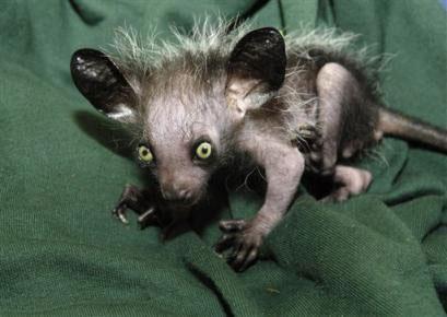 【引用】世界上最奇异的动物