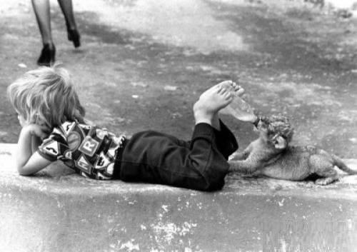 有图为证: 小孩与宠物难养也 - 周小三 - 星期三噪音