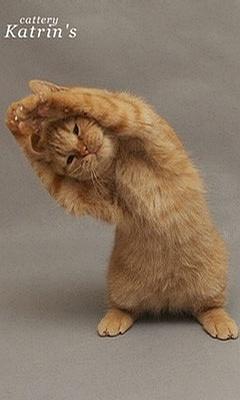贱猫进行时燃烧热情,用生命表演