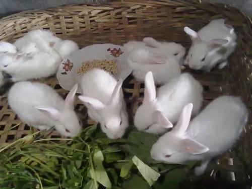【超级可爱的小兔子们】
