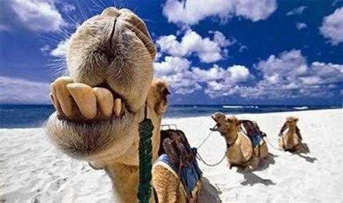 动物的笑脸,愿大家有个快乐的周末