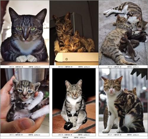 爱自己 爱动物 爱自然 爱生活 【【【有爱猫种类大全〈下册〉(配图哦