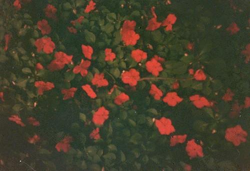 皱纹纸 大红花