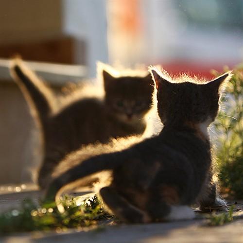 动物摄影:猫咪及其他