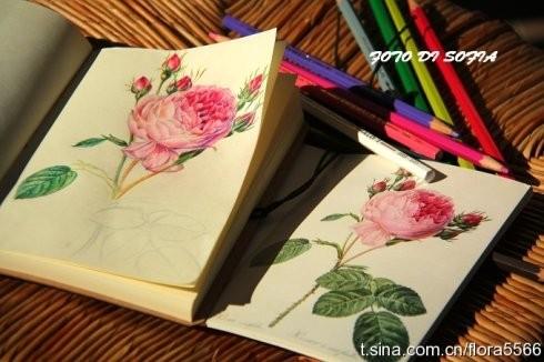 彩色铅笔画花卉;;