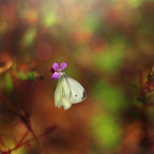 唯美微距摄影2--来自挪威的摄影师 - 奇丽格 - 学摄影 学电脑...