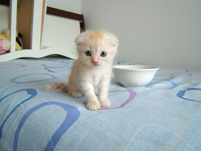 """我喜欢的""""小猫"""""""