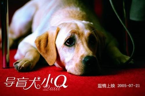 《导盲犬小Q》:朴实而干净的镜头,少女日记里不得安宁的哀伤 - 火神纪 - 妄一家言