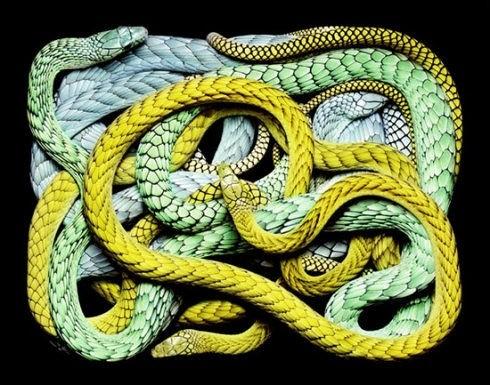 蛇 不喜勿入 慎入 入后无悔