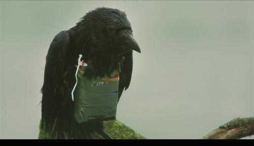 黑影月精图:九月刊 - Y★黑黑 - 黑黑★爱电影
