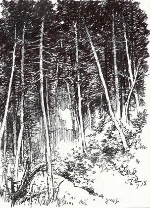 树林速写图片素材