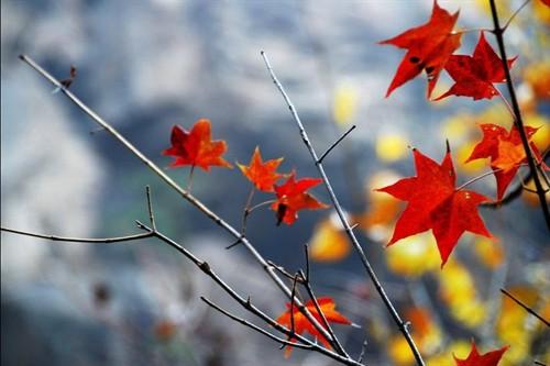 感受浓浓秋色 细品落叶之美