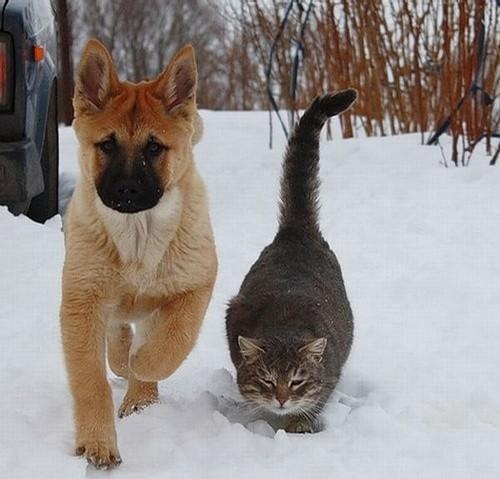 答:(1)猫属于猫科动物,狗属于犬科动物!