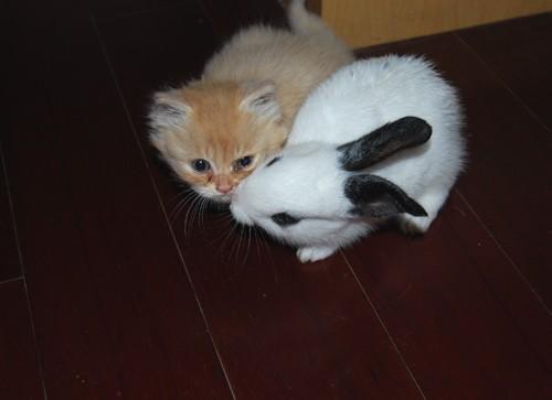 我家的猫猫和兔兔