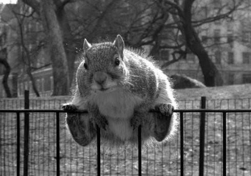 【图个乐儿】每个动物都是喜剧帝