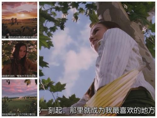 梧桐没了,朱莉好伤心,那不仅仅是一棵树,而是寄托了朱莉梦想的乐园.图片
