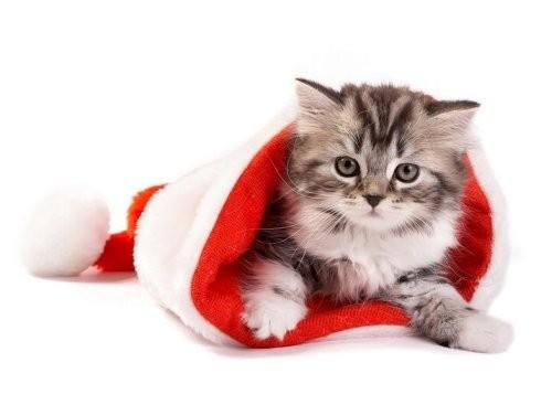 k> 超可爱小萌猫喜迎圣诞