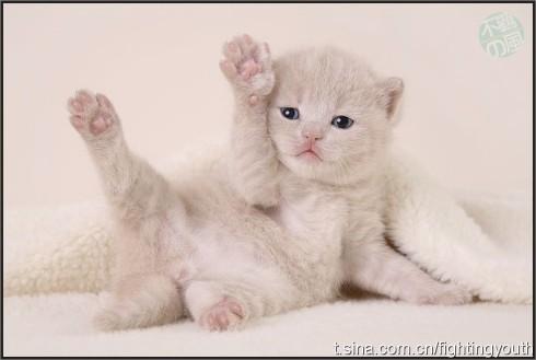 k可爱的小猫的照片
