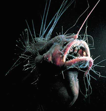 盘点世界各地奇特的怪物图片