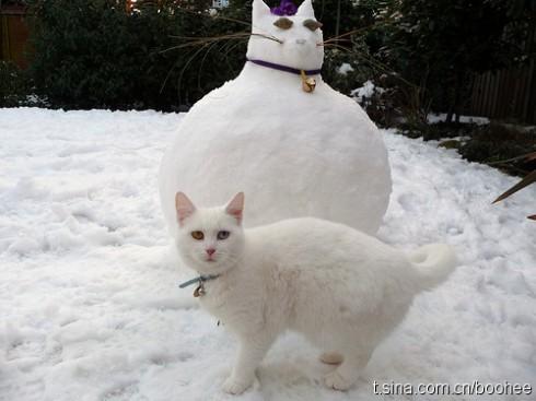 可爱的猫咪图 你要积分么?