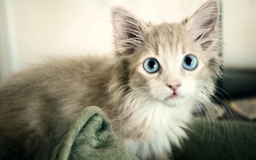 教我画可爱的小猫