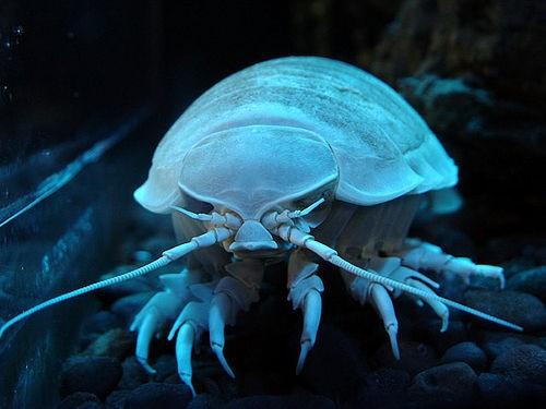深海动物(组图)