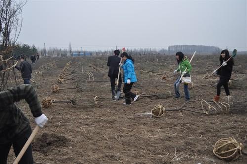卢米埃志愿者们植树节活动照片