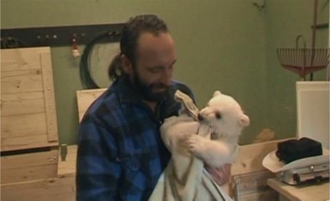 谁是世界上最可爱的北极熊?克努特(knut)!