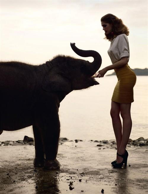 奇异的遐想 大象与美女
