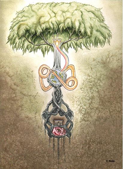 它巨大的树根分为三条主.