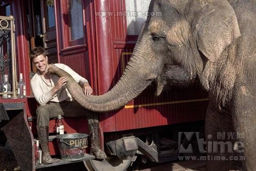 大象的眼泪 世界是最大的马戏团