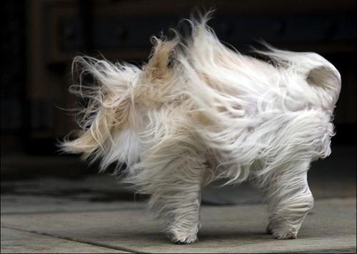 狗狗们通常都喜欢----在风中可爱萌凌乱大全表情搞笑图片娃动态包图片