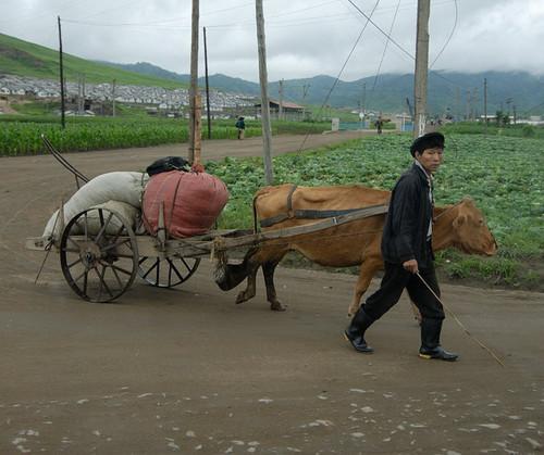 朝鲜农民的生活照 最最集中营 电影