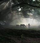 乡村故事:榕树下