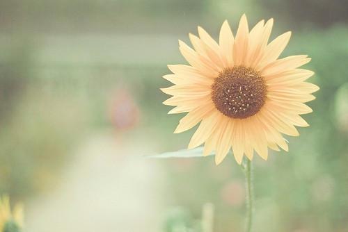 他们就像向日葵 清新温暖的小事