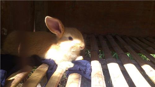 可爱胖兔壁纸图片