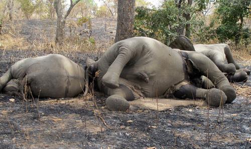 非洲野生动物惨遭杀害现场