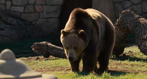 动物挺可爱的,正太长得好看,就是在里边性格不讨喜,范宁这个角色一直