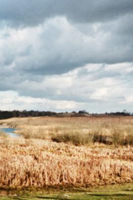 在博雷克森林里( 2009 )