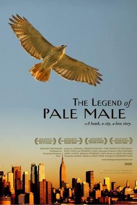 大鹰帕尔·梅尔的传奇故事( 2009 )