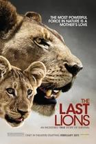 最后的狮子/The Last Lions(2011)